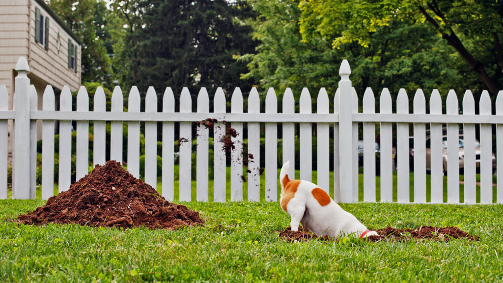 Beautiful Dog Ruining Yard
